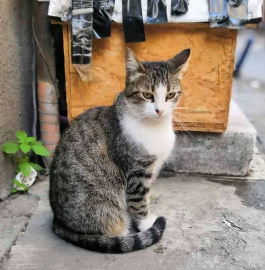 Why is the City of Istanbul Brimming with Cats?