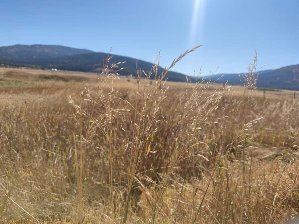 kootenai montana